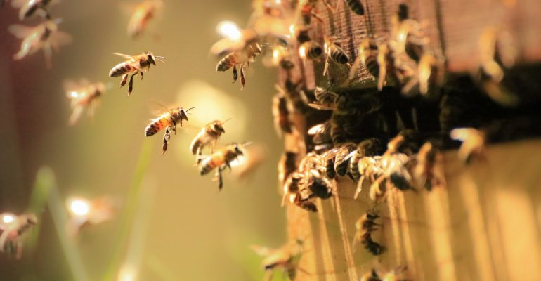 Sauvagarder les abeilles